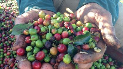 親近在地農作  咖啡達人許寶霖說「咖啡的故事」