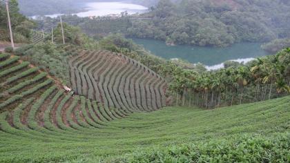來趟綠活生態小旅行!新北市坪林茶鄉體驗